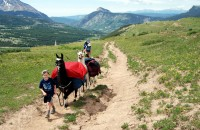 Hiking and Backpacking with Llamas in Colorado